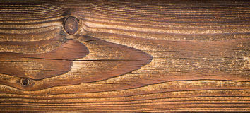 Klassiskt trä royaltyfri foto