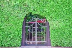 Klasyczna projekta czerni dokonanego żelaza brama w piękni zieleni dziąsła fotografia stock