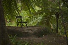 Klasyczna stara antykwarska ławka w ogródzie botanicznym fotografia royalty free