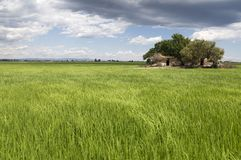 Klasyczny Ebro delty krajobraz z swój ryżowymi polami zdjęcia stock