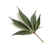 Klasyczny marihuana liść Fotografia Royalty Free