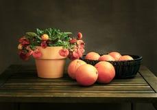 Klasyczny rocznika wciąż życie z kwiatem i pomarańczami Calceolaria zdjęcie stock