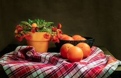 Klasyczny rocznika wci?? ?ycie z kwiatem i pomara?czami Calceolaria obraz stock