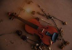 Klasyczny skrzypce stawiający obok wysuszonego kwiatu na drewnianej desce, rocznika ciepły lekki brzmienie fotografia stock
