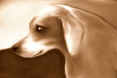 Klasyczny ulica pies Sepiowy ilustracja wektor
