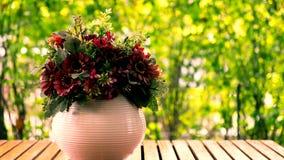 Klasyk kwitnie w wazie fotografia royalty free