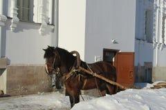 Klasztorny koń zdjęcia stock