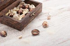 Klatka piersiowa i seashells Fotografia Stock
