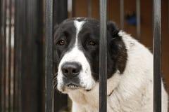klatka pies Zdjęcie Stock