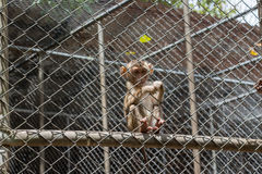 klatki małpa Obrazy Royalty Free