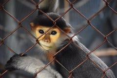 klatki małpa Fotografia Stock