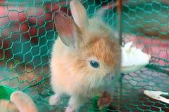 klatkowi króliki Zdjęcie Royalty Free