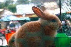 klatkowi króliki Zdjęcia Stock