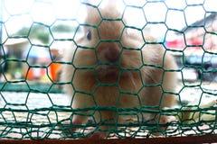 klatkowi króliki Fotografia Stock
