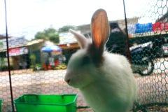klatkowi króliki Obrazy Royalty Free