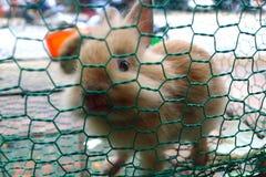 klatkowi króliki Obrazy Stock