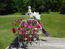 Klatkowi kwiaty obraz royalty free