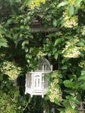 Klatkowi ptaki i biały kwiat Obrazy Stock