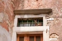 klatkowy kot Zdjęcie Stock