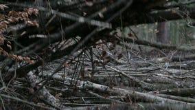 Klauw op bosbouwmolen die takken opnemen stock video