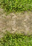 Klaverzuring op concrete vloer als frame Stock Foto's