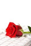 klawiaturowy łgarski czerwieni róży biel Zdjęcia Stock