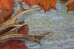 Klaxons d'oeufs de poisson sur des feuilles d'érable rouge Photographie stock libre de droits
