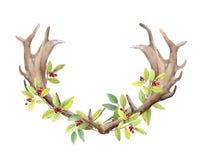 Klaxons d'un mâle de cerfs communs sur le fond blanc d'isolement Baies et branches avec des feuilles tissées dans des klaxons wat Photographie stock