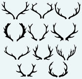 Klaxons de cerfs communs Photo stock