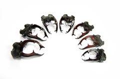 Klaxons de coléoptères de mâle Photos stock