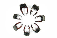 Klaxons de coléoptères de mâle Images libres de droits