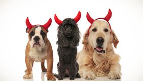 3 klaxons mignons de diable d'usage de chiens pour Halloween photo stock