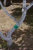 Klebstreifen für schützende Bäume von kriechenden Insekten Stockfotografie