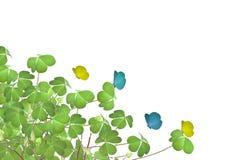 Klee Lizenzfreie Stockfotografie