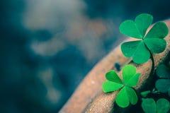Klee-Blätter für grünen Hintergrund stockbild