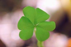 Klee - Blatt des Grüns drei Stockfotos