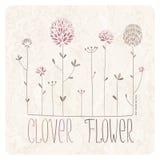 Klee-Blumen-Wiese Stockfotos