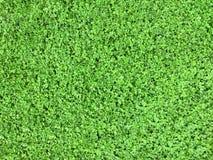 Klee-Hintergrund-Frühlings-Tag Lizenzfreie Stockfotos