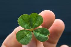 Klee 4-leaf mit den Fingern und blauem Hintergrund Lizenzfreie Stockfotos