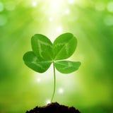 Klee mit vier Blättern auf grünem Hintergrund Lizenzfreies Stockfoto