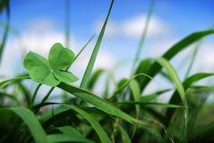Klee mit vier Blättern im Gras Lizenzfreie Stockfotos