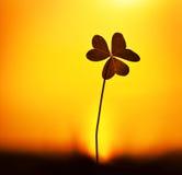 Klee am Sonnenuntergang Lizenzfreie Stockfotografie