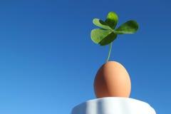 Klee und das braune Ei im blauen Himmel #2 Lizenzfreie Stockfotos