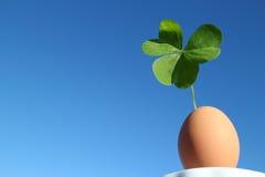 Klee und das braune Ei im blauen Himmel Stockfotografie