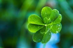 Kleeabschluß mit vier Blättern oben Lizenzfreie Stockfotos