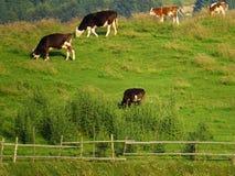 Kleie - Moeciu Rumänien Lizenzfreies Stockfoto