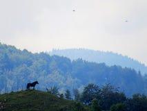 Kleie - Moeciu Rumänien Lizenzfreie Stockfotografie