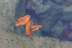 Klein Autumn Colored Leaves Floating in een Rust royalty-vrije stock afbeelding