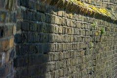 Klein bomentussenvoegsel in de oude bakstenen muur stock afbeeldingen