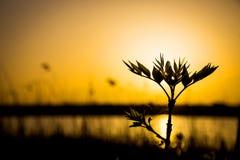 Klein boomtakje tegen zonsondergangachtergrond stock fotografie